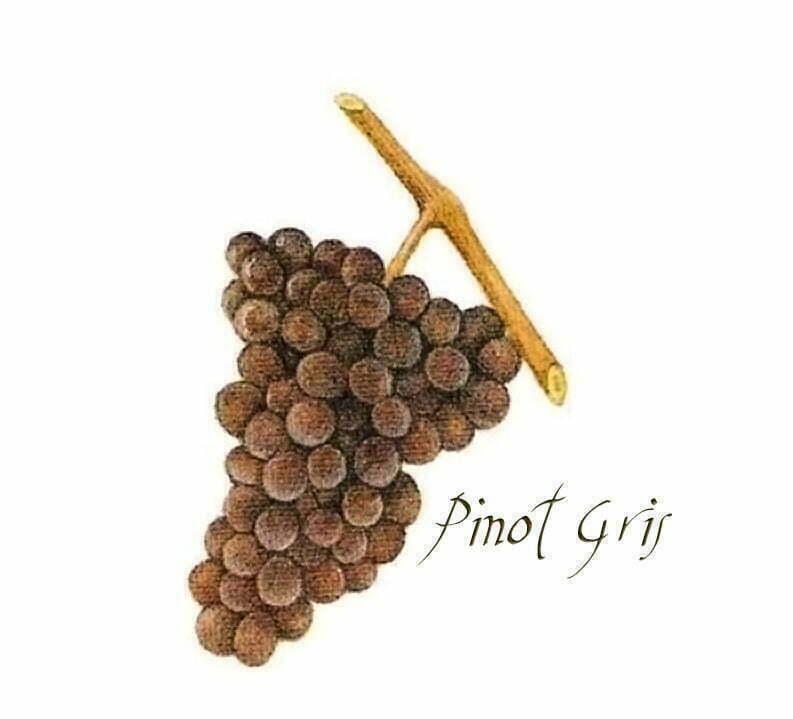 Pinot Gris (Pinot Grigio)